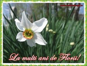 florii felicitare