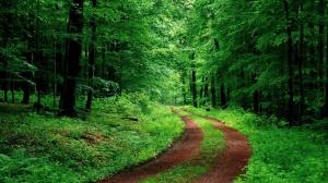peisaj_padure_verde-1920x1080