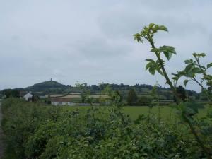 dealul2