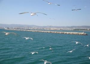 pescarusi in zbor ALEXANDROUPOLI