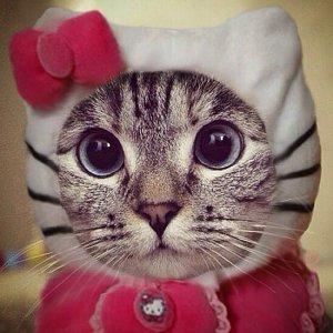 Funny-Cat-Costumes.jpg 777